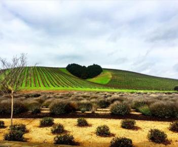 Heart Hills in Paso Robles