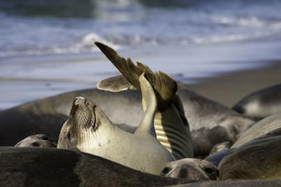 Seals Sunbathing