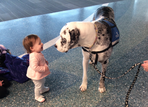 Therapy dog with child at the Gerald R. Ford International Airport