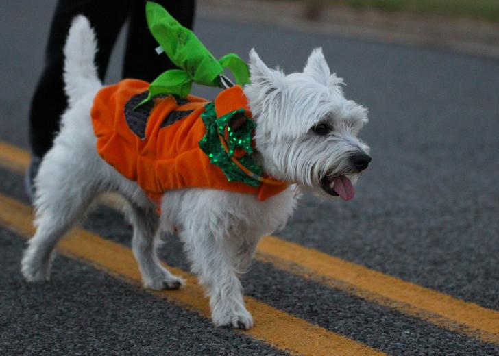 Dog at the Bark in the Dark run in Grand Rapids