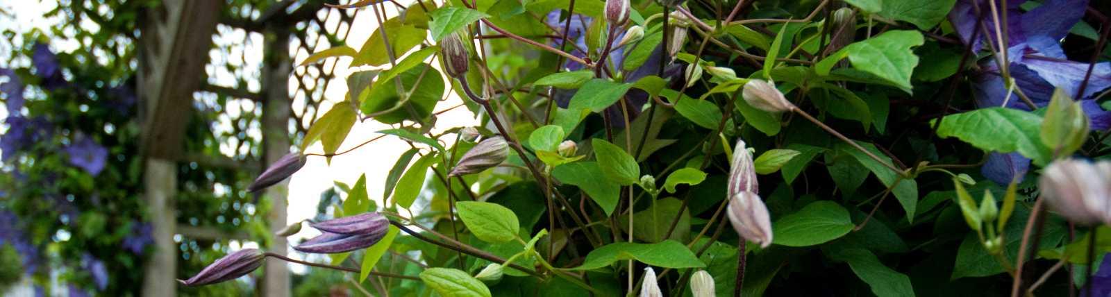 Washington Park Florist