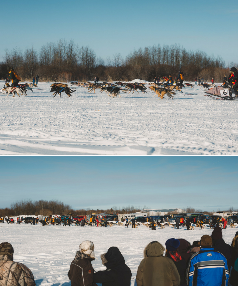 The Pas_dog sled races