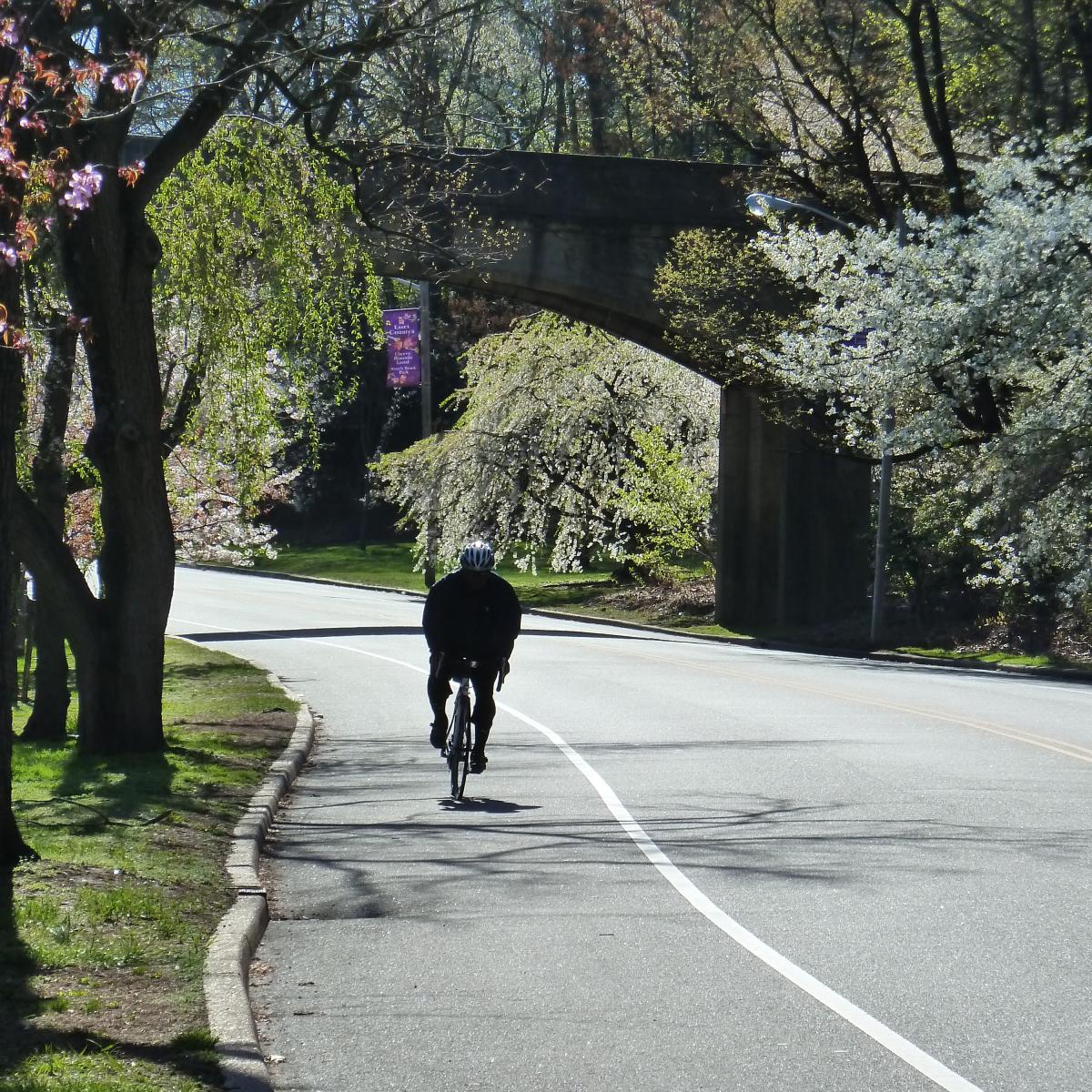 Bike - Branch Brook