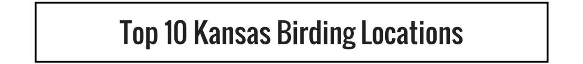 Top 10 Kansas Birding Locations