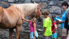 Heritage, Harvest, & Horse Festival