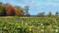 Fall Foliage Vineyard Walk