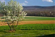 Farm Fields in Cumberland Valley