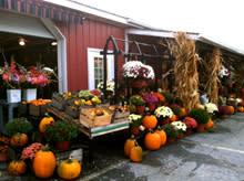 Paulus Farm Market Fall-220