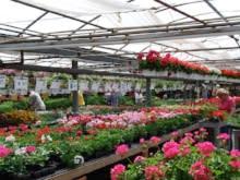 Ashcombe Farm & Greenhouses