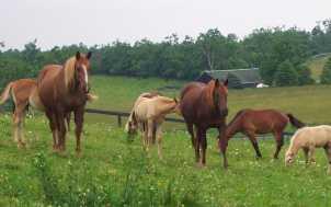 Kenridge Farm: Lexington, KY