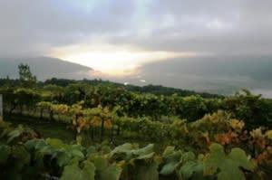 Finger Lakes Best Wine Region