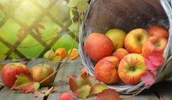 UC Master Gardeners' Fall Fruit Festival