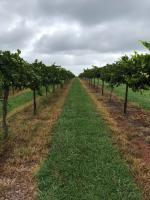 Cauble Creek Vineyards