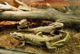 Westman Reptile Gardens
