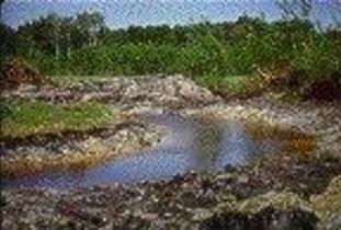 Alonsa_Conservation_District_-_Bacon_Ridge_Ecological_Reserve.jpg
