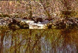 Alonsa_Conservation_District_-_Bluff_Creek.jpg