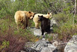 Gangler's Wildlife Tours