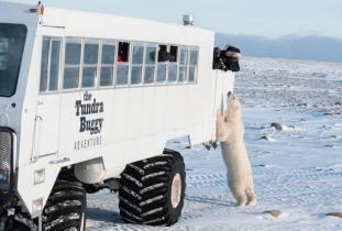The_Tundra_Buggy_Adventures.jpg