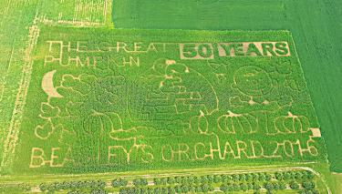 """2016 Corn Maze at Beasley's Orchard celebrating 50 years of """"It's the Great Pumpkin, Charlie Brown!"""""""