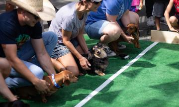 Dachshund Races at Krause's Cafe