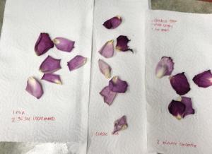 petals after