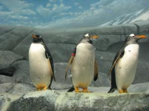 TripAdvisor_Best Aquariums in the World_TN Aqua 1
