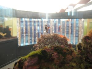 This fish is peering at the bubble columns beside the fish tanks at the Children's Department at the ACPL Main Branch.