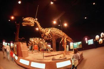 Delaware Museum of Natural History - Dino
