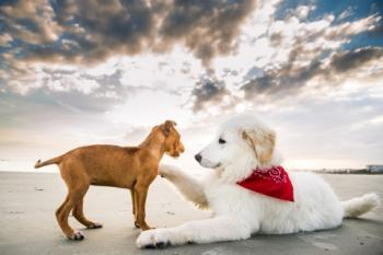 Dog-friendly activities in the Golden Isles - Saint Simons Photography