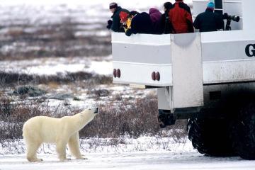 Great White Bear Tours Inc.