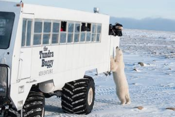 The Tundra Buggy® Adventure