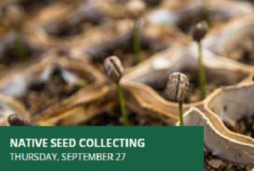 Native Seed Collecting