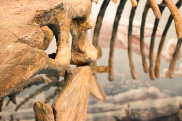 Canadian Fossil Discovery Centre - A Morden Staycation