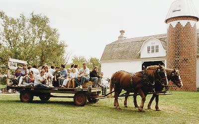Buckley Homestead horses in Lowell, IN