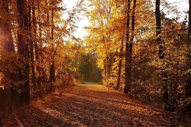Fall Along Mission Creek Greenway