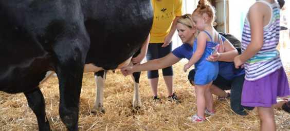 Shatto Milking