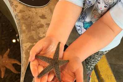 Young visitor holding starfish