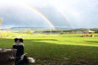 Molly watching rainbow over the ranch