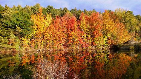 Tree's Showing Fall Foliage