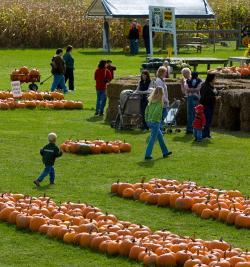 pick-n-patch-stanley-pumpkins-corn-maze