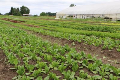 Rows of plants at Wild Hare Farm in Puyallup, Washington