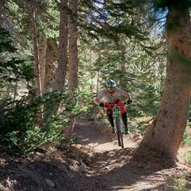 Flying through the pines, photo by Brant Hansen