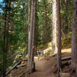 Deep forest on the Great Western Trail, photo by Brant Hansen
