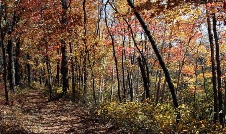 Indiana Dunes National Lakeshore Cowles Bog Trail