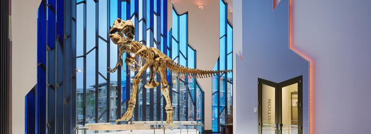 T-Rex fossil at the Indoor Fun Museum at Prairiefire in Overland Park