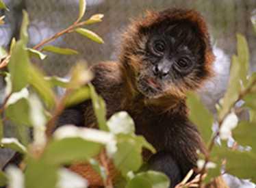 Monkey at Chattanooga Zoo