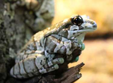 Frog at Chattanooga Zoo