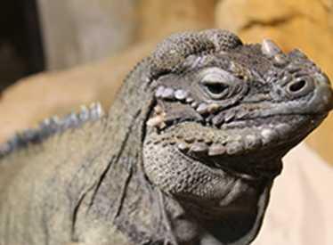 Lizard at Chattanooga Zoo