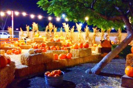 This picturesque pumpkin patch is perfect to visit in the evening too!