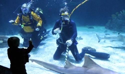 Shark diving at PDZA